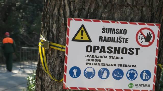 Split: Sve je više srušenih bolesnih stabala iz Park šume Marjan