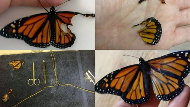 Leptiru oštećenog krila izradila protezu kako bi mogao letjeti