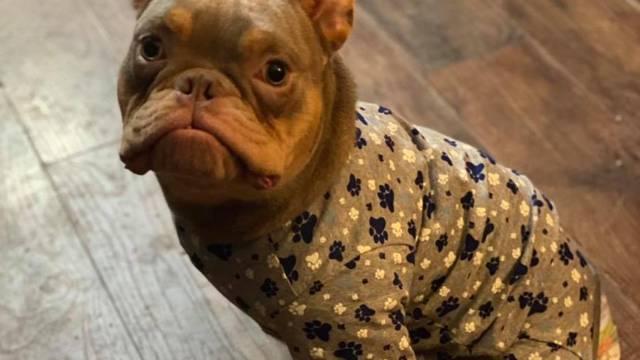 Pas s urođenom deformacijom napokon pronašao dom za sebe