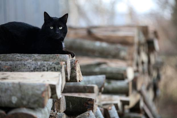Drva za ogrjev mačke koriste za penjanje i kako bi se odmorile