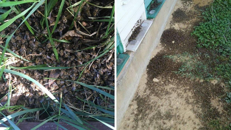 U Međimurju tragičan pomor pčela: Sumnjaju na trovanje...