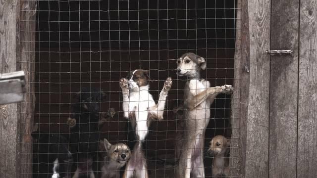 Udruga Prijatelji životinja: U Njemačkoj obavezne šetnje za pse, a u Hrvatskoj pate na lancu