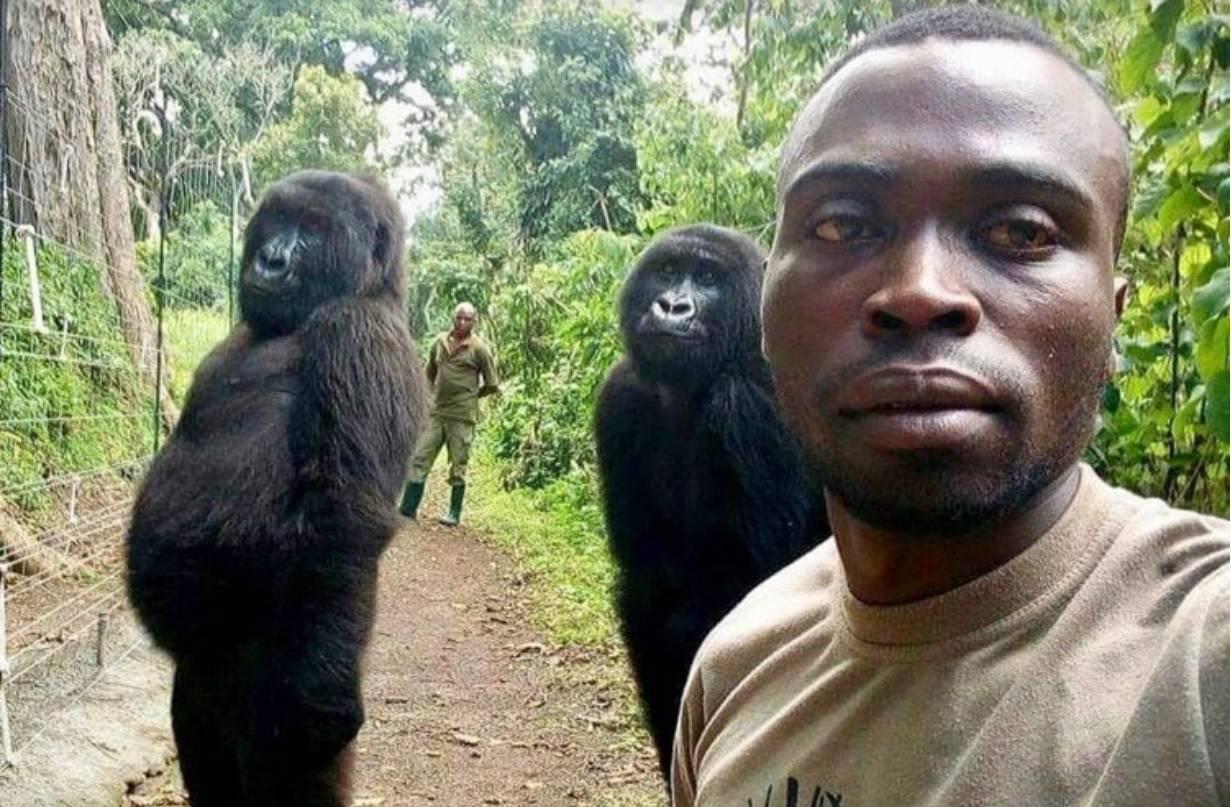 'Influenceri' iz džungle: Gorile pokazale kako pozirati za selfie