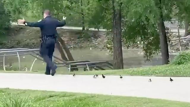 Policajac na zadatku: Pratili ga pačići dok im nije pomogao