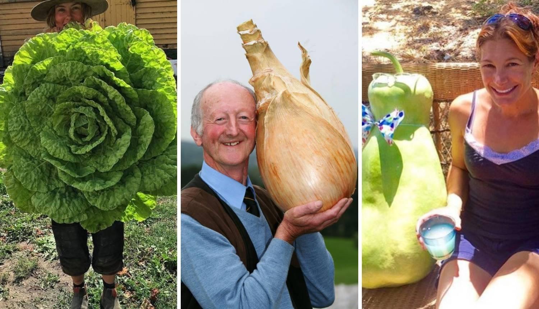 Šokirali se gigantskim povrćem u vrtu: Luk, mrkva, krumpir...