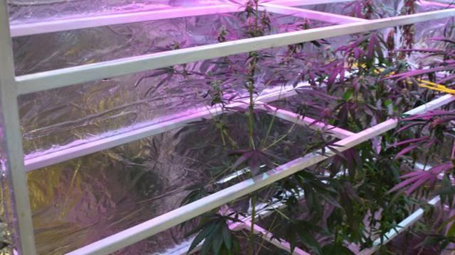 U kući u Sesvetama napravio laboratorij za uzgoj marihuane: Našli mu osam stabljika i vage