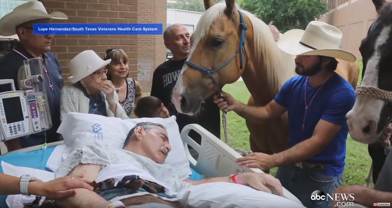 Dirljiv susret: Na kraju života posjetili su ga prijatelji - konji