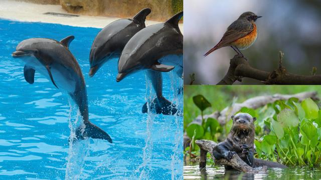 WWF: Nestaju životinje, biljke i staništa, a to povećava rizik od razvoja zoonotskih bolesti