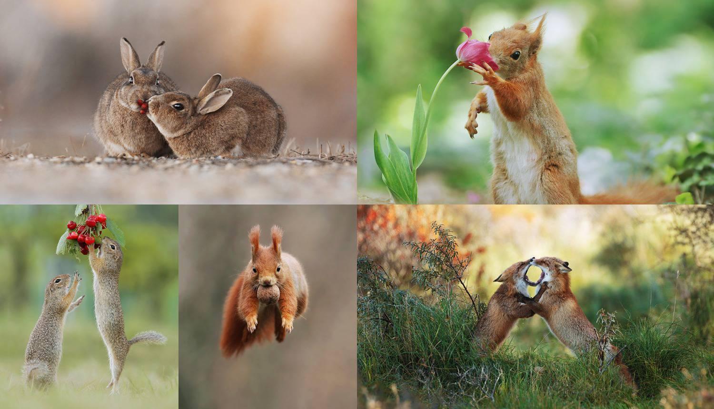 Pogledajte ove fotografije - dan vam može postati puno ljepši