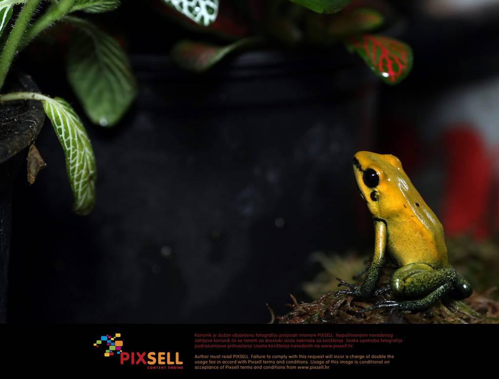 Sanjin Strukić / PIXSELL