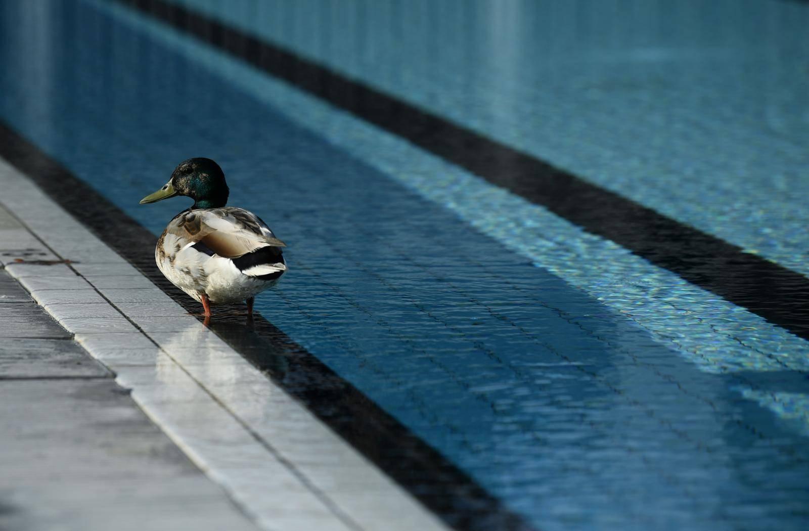 Zagreb: Otvoreni vanjski bazeni na Mladosti, a kupaju se tek pokoji kupač i jedna patka