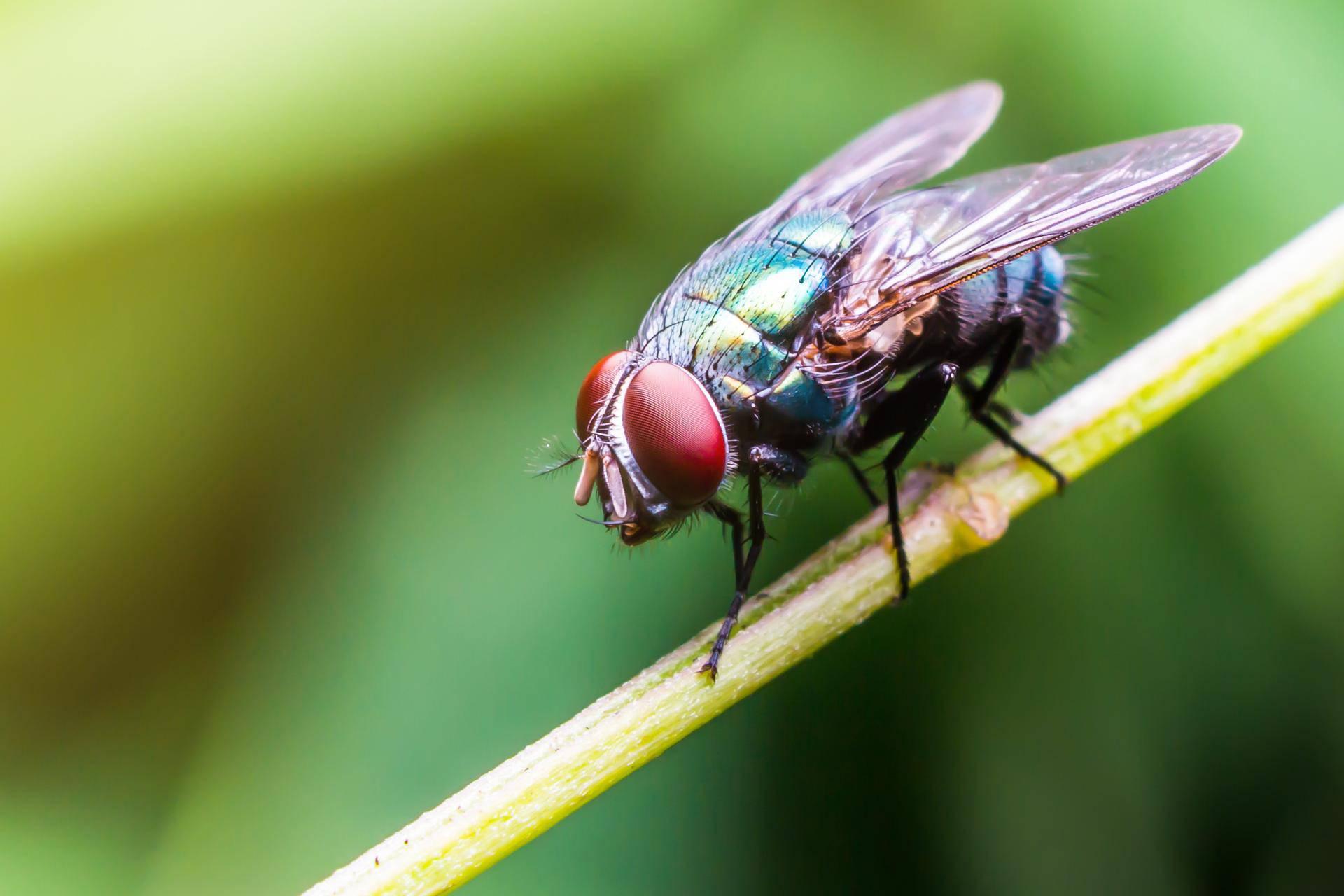 Jednostavan trik pomoću kojeg će muhe zaobilaziti vaš dom...