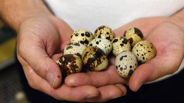 Koliko su prepeličja jaja korisna za zdravlje? 'Prestižu' kokošja jaja u željezu i vitaminu B12