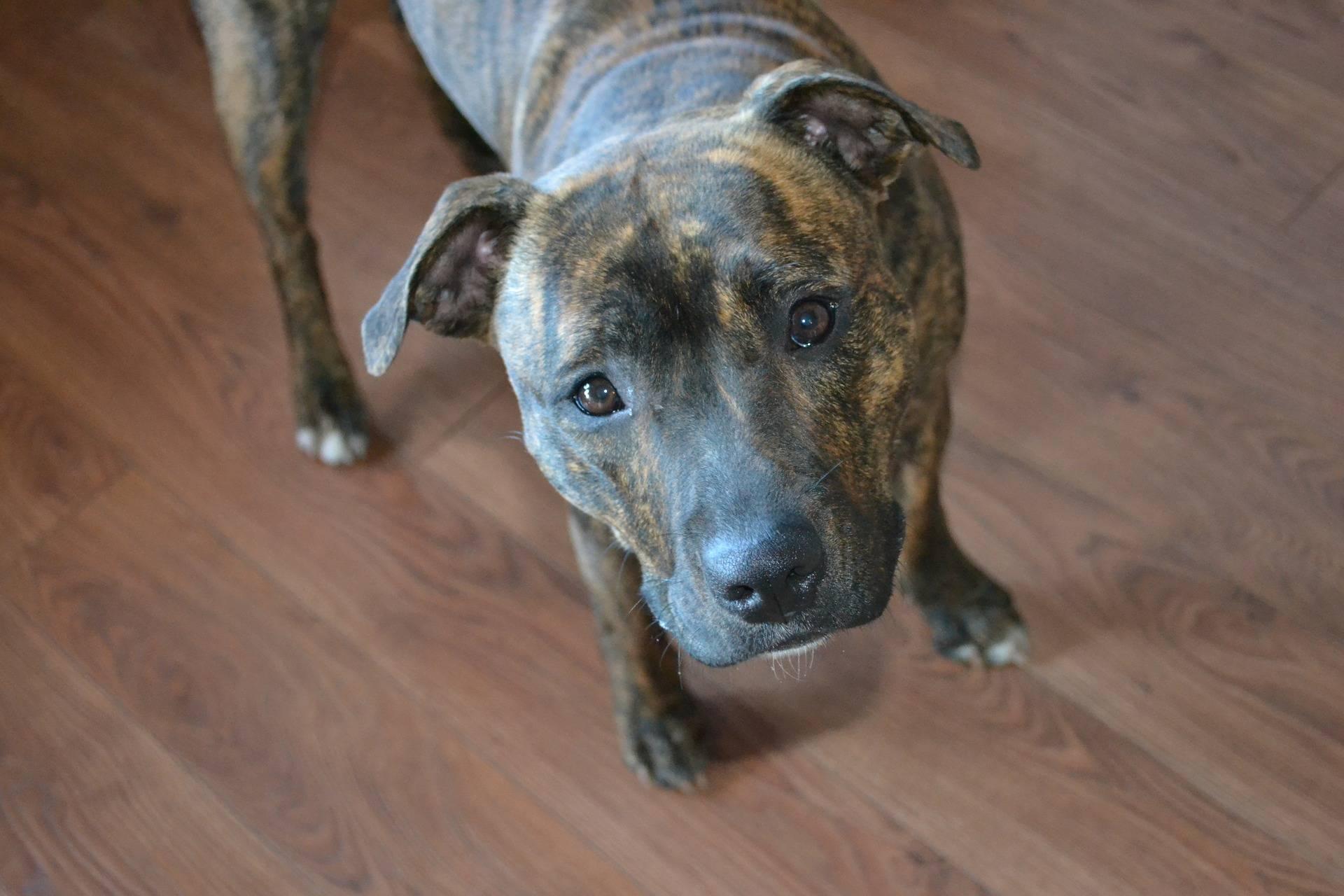 Banka blokirala uplatu čeka zbog 'terorističkog' imena psa