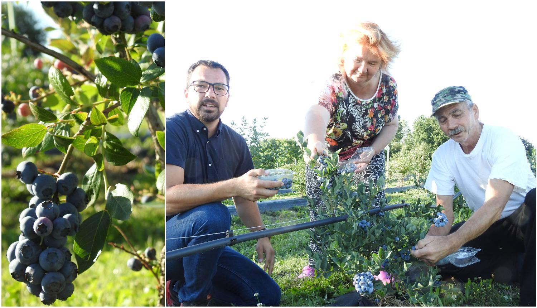 Mjera borovnica je između 15 i 20 kuna, a zdrave su i ukusne