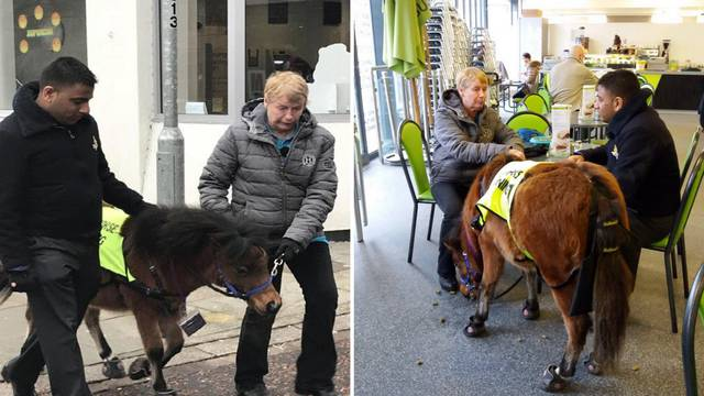 Dobio ponija-vodiča: 'Dulje se šetamo jer ga svi žele maziti'
