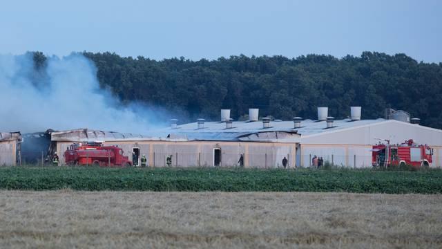 Andrijaševci: Izgorjela Pikova farma svinja, stradalo 1000 svinja?
