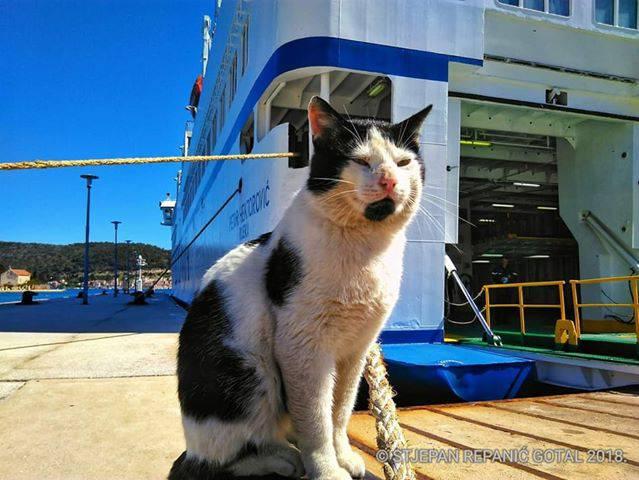 Višani traže mačka pomorca: Popeo se, izgleda na krivi brod