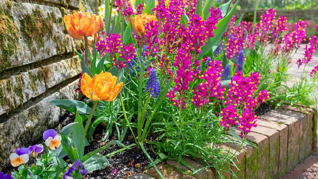 Spring garden after the rain