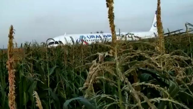 Avion udario u jato galebova i sletio u polje: 'Pilot je heroj!'