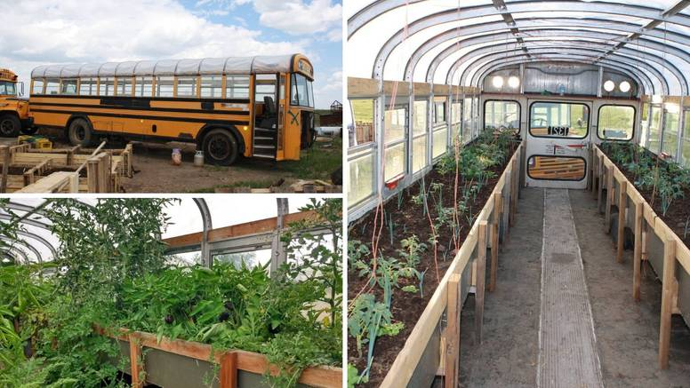 Ideja za sadnju bilja: Pretvorila je stare autobuse u staklenike