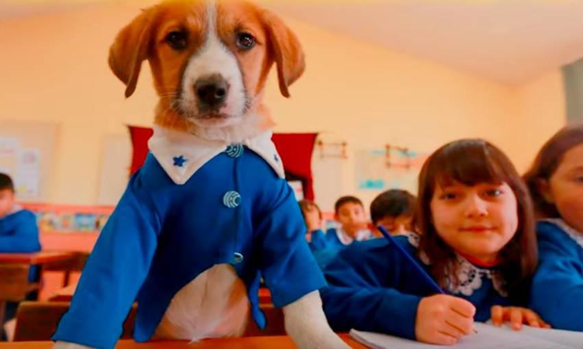 Pas postao 39. učenik škole: Sjedi u klupi i ima uniformu!