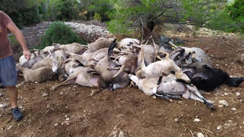 Grom na Braču usmrtio im čak 47 ovaca: 'Ostali smo bez ičega, nisam više u stanju ni pričati'