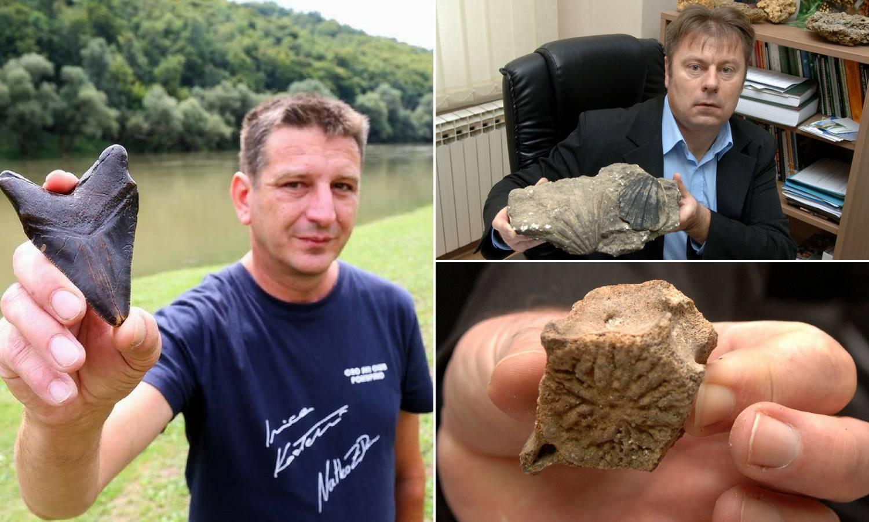 Ralje iz panonskih dubina: Zub megalodona našli i u Slavoniji