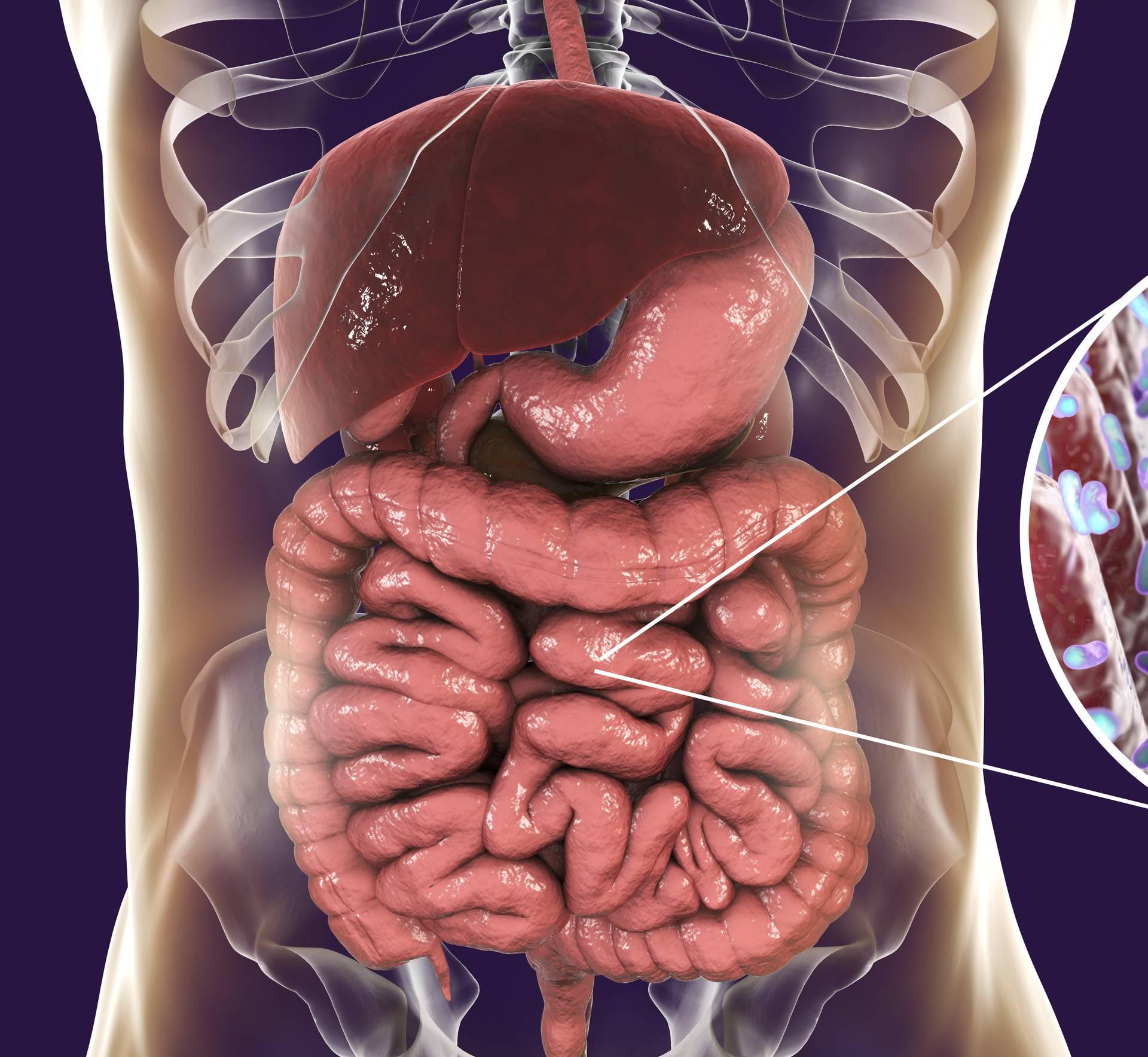'Antibiotici mijenjaju sastav i raznolikost crijevnih mikroba'