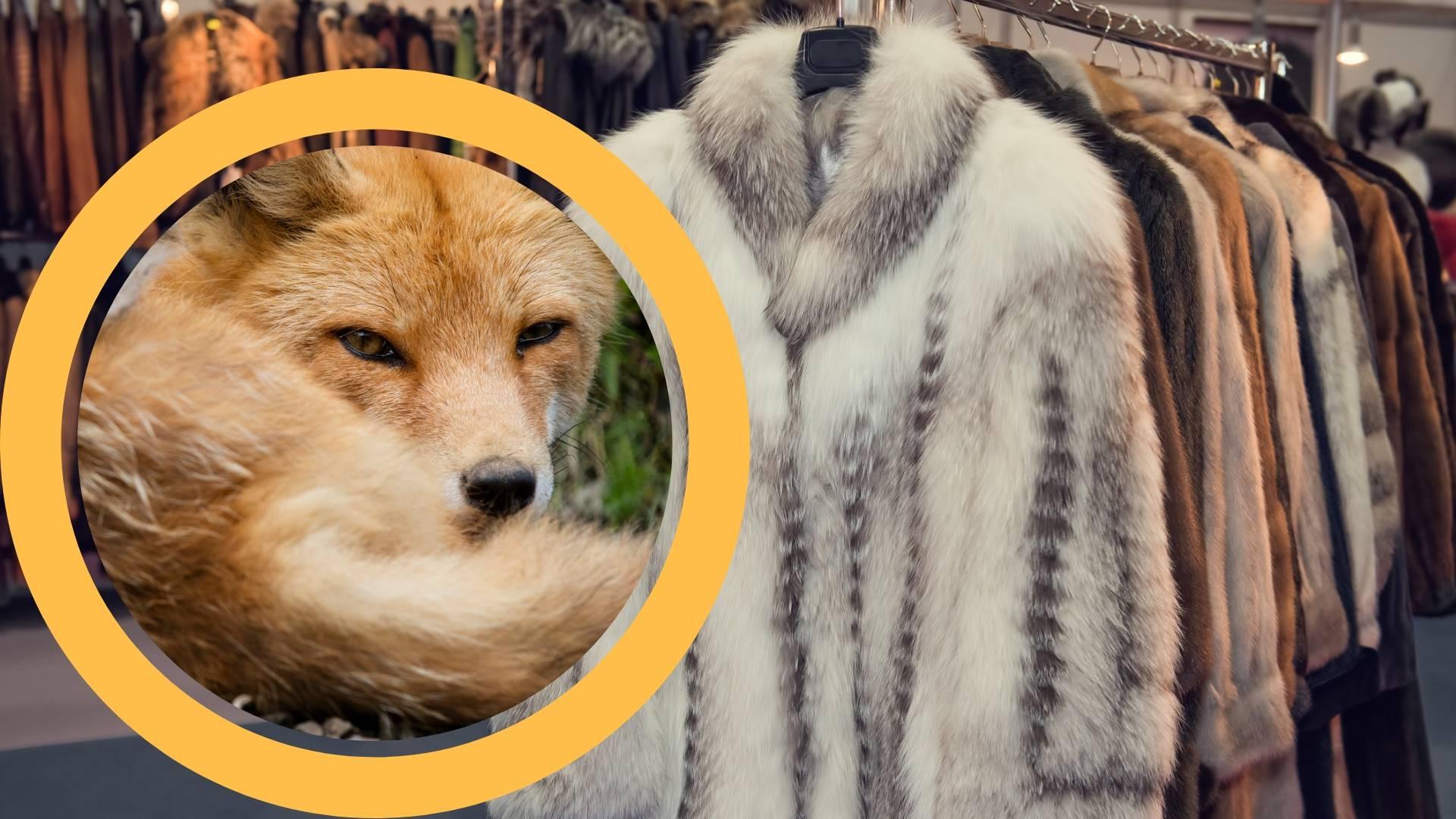 Pravo krzno uskoro će se moći naći samo na živim životinjama
