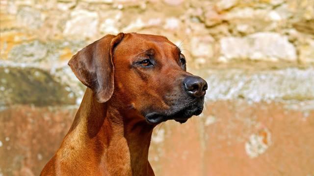 Muškarac optužen za silovanje pasa opet nije došao na sud u Zagrebu, tražit će da ga pritvore