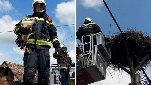Rode ispale iz gnijezda u mjestu Kuče, vatrogasci su ih spasili...
