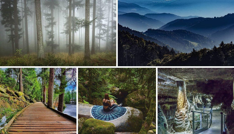 Ovo je najpopularnija šuma na Instagramu - ljudi je obožavaju