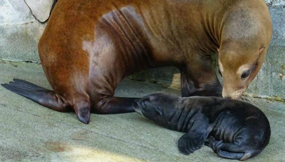Najslađi video: Zagrebačka beba morskog lava mazi se sa svojom mamom u Zoološkom