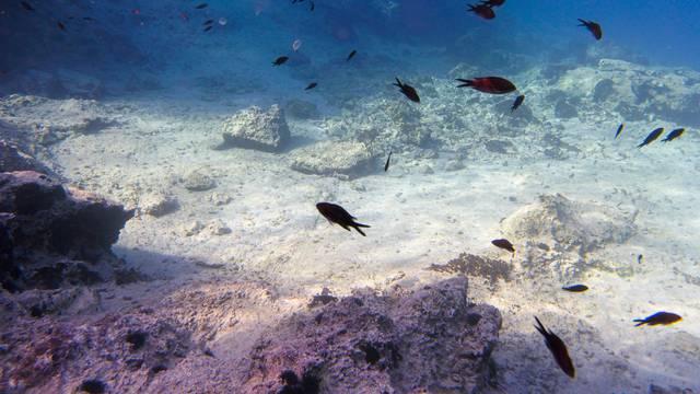 Ribolov u Indijskom oceanu nije reguliran i ugrožava životinje...