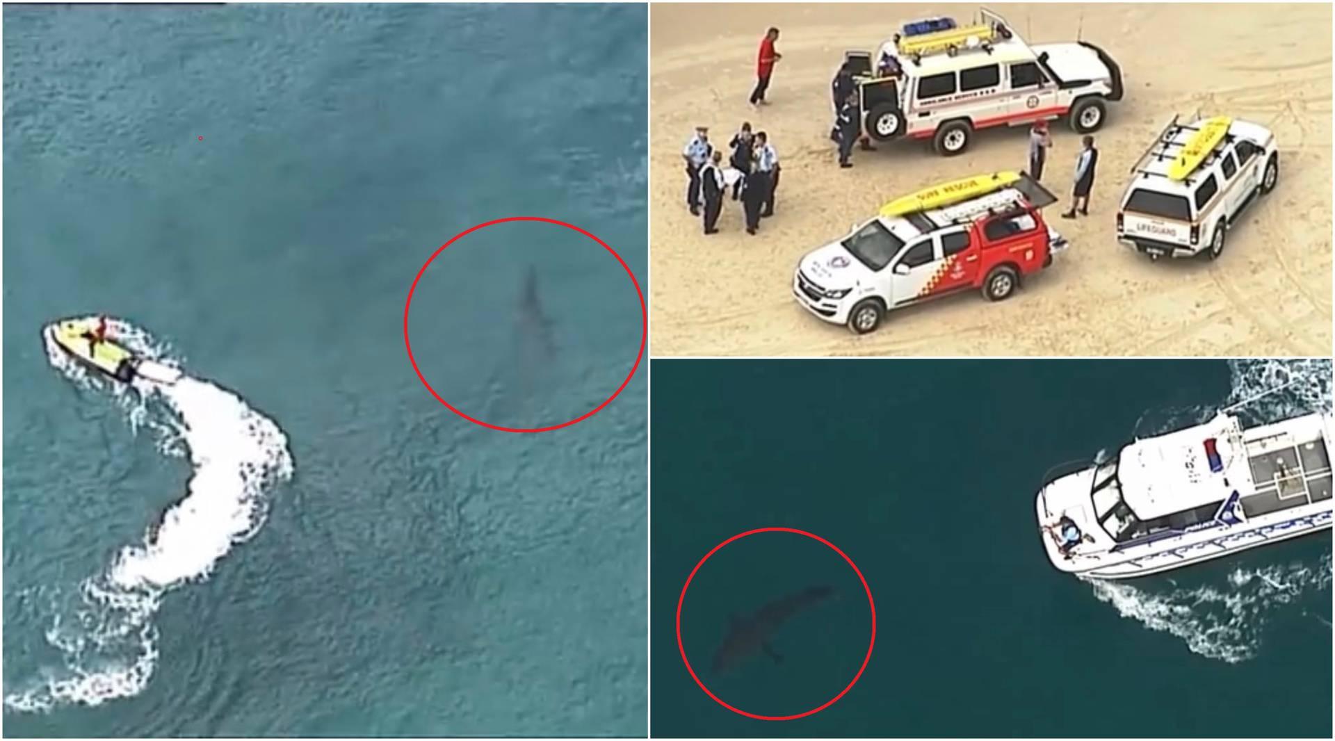 Surferi uspjeli otjerati morskog psa dugog tri metra: Napao im kolegu koji ipak nije preživio...