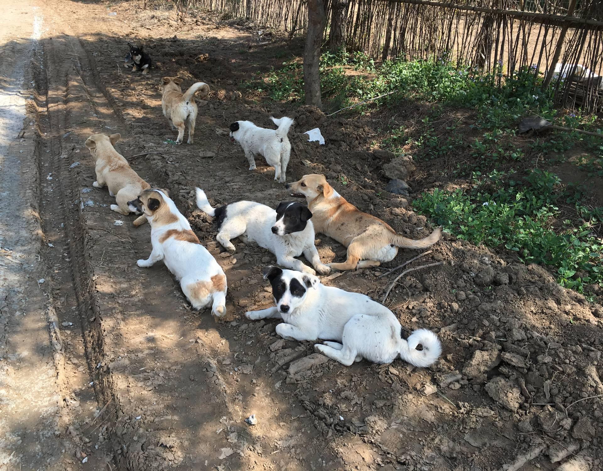 Mnogi ljubimci u Kini na rubu gladi zbog epidemije Korone