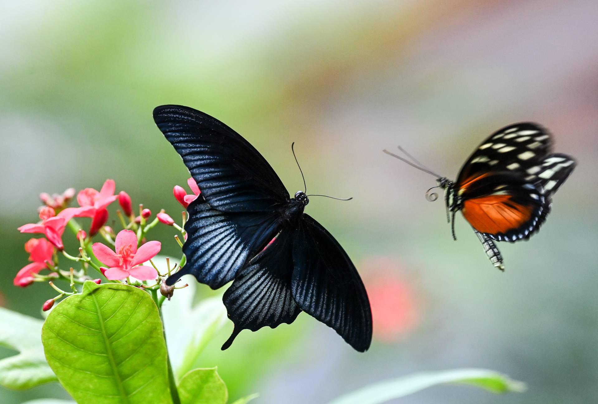 Tropski botanički vrt prepun fascinantnih životinja ponovno je otvoren za posjetitelje
