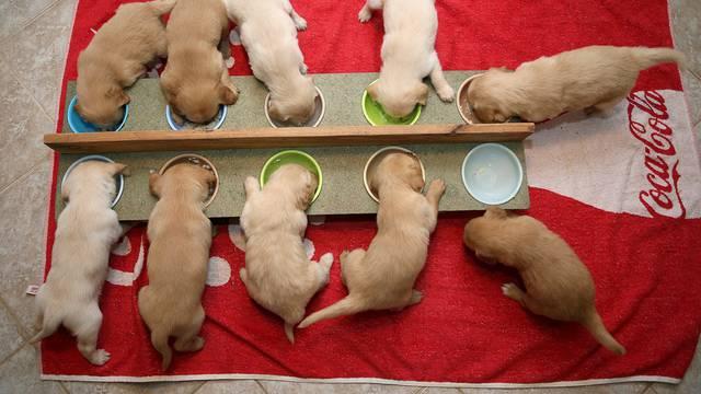 Imaju pune ruke posla: Uzeli su jednog psa, a dobili ih još deset
