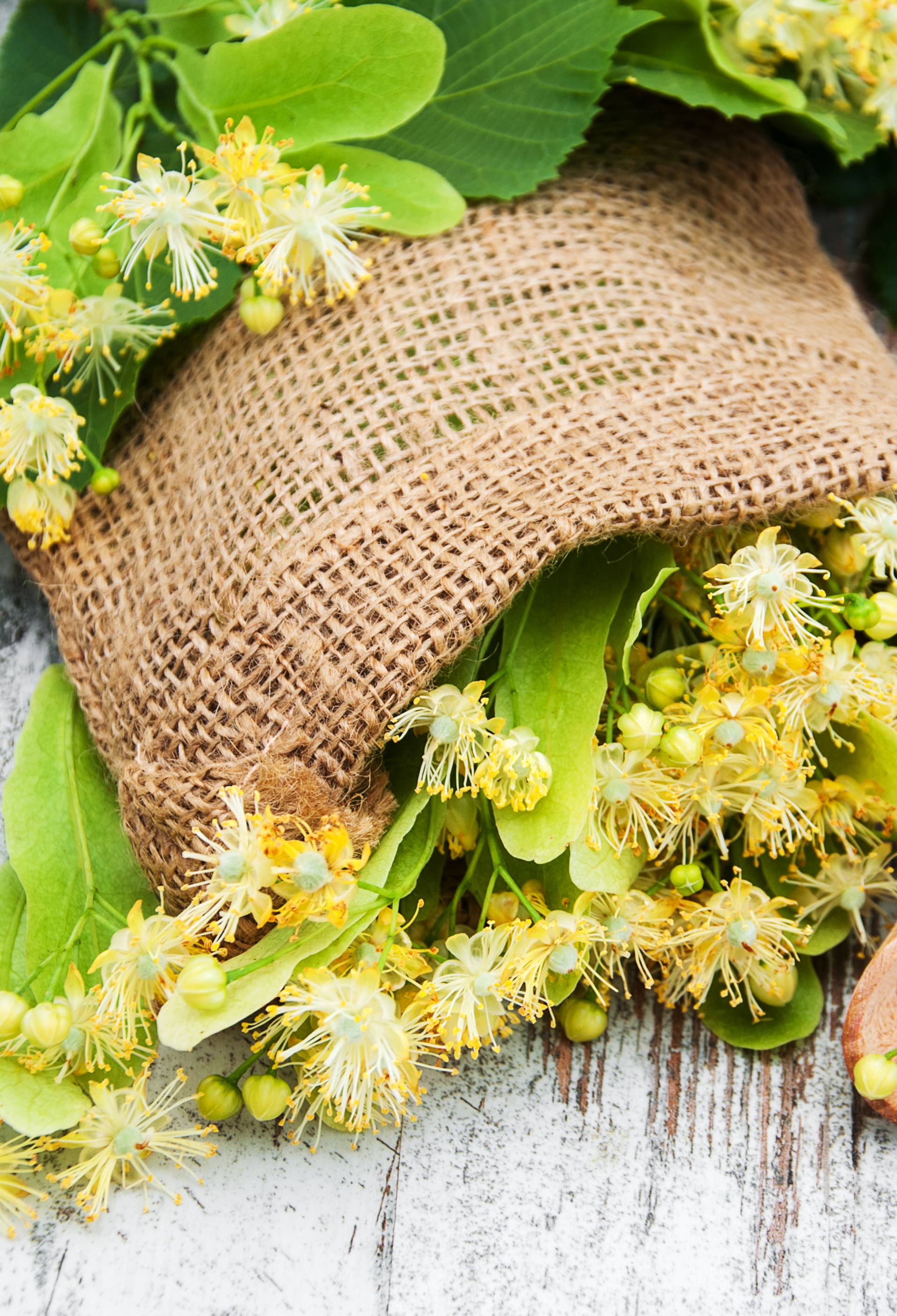 Mirisni cvjetovi lipe korisni su kod nesanice i povišenog tlaka