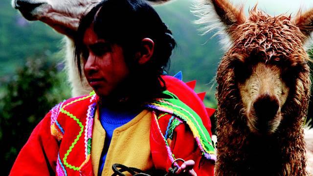 Jumbo Tribe