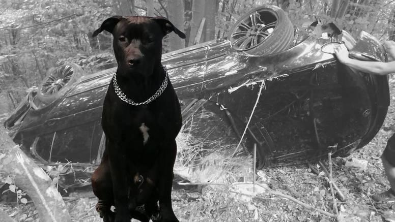 Pao je u provaliju kod Plitvica, pas je od šoka iskočio iz auta: 'Jeste li ga vidjeli? Umiljat je'