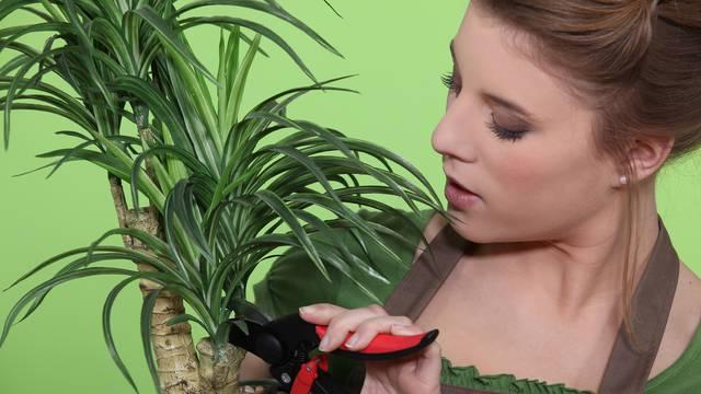 Tri sobne biljke koje uspijevaju i onima kojima sve ostalo vene