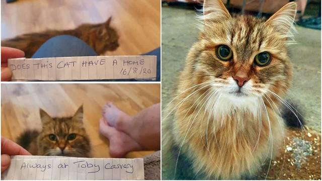 Fina mačka: Za ručak i večeru otišla bi do restorana pojesti