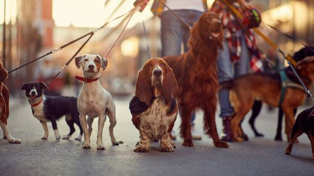 Neki psi mogu naučiti nove riječi i izreke gotovo odmah
