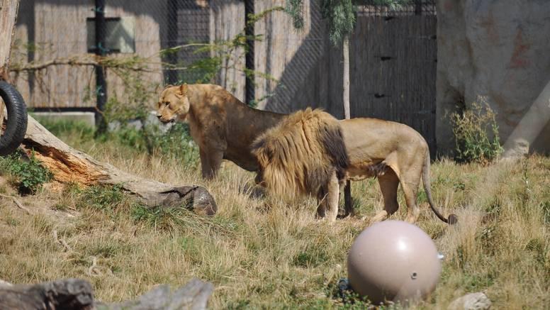 Čuvari zooloških otkrili što se sve događa iza zatvorenih vrata
