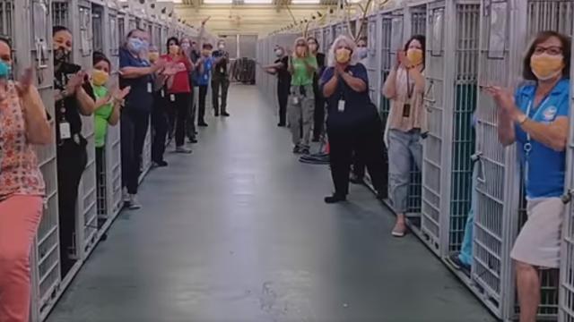 Udomljeni svi psi: Prvi put su kavezi u ovom skloništu prazni