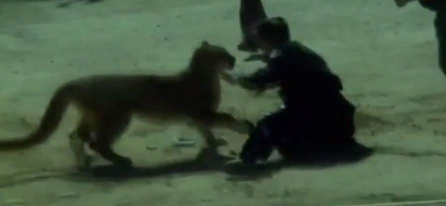 Uznemirujući video: Policajka se hrvala s planinskim lavom