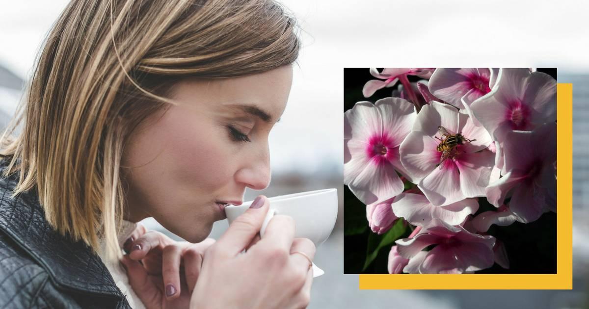 Čaj od ove biljke ublažava PMS ali i rješava napetosti i straha