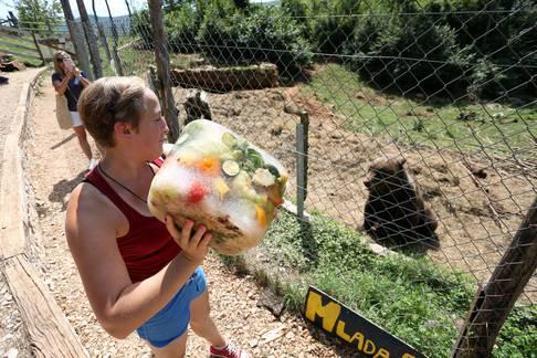 Medvjedi u Kuterevu uživaju u ljetnim poslasticama